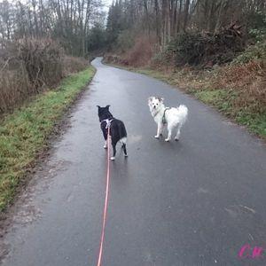 Felina und Meringa
