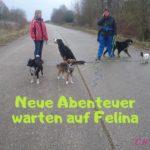 Felina neue Abenteuer
