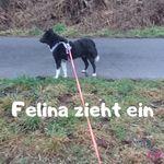 Hund zieht ein
